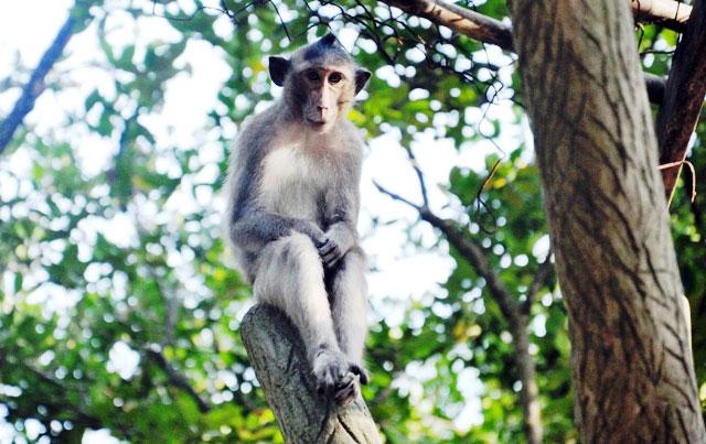 """Đặt chân đến """"vương quốc khỉ"""" trên ốc đảo xanh ở Sài Gòn - 16"""