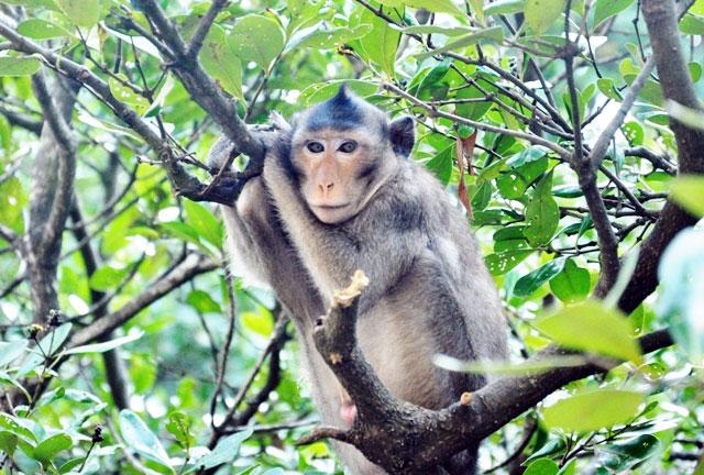 """Đặt chân đến """"vương quốc khỉ"""" trên ốc đảo xanh ở Sài Gòn - 17"""