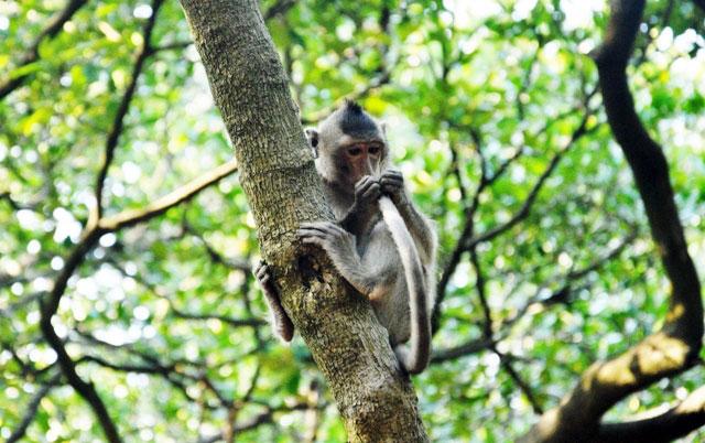 """Đặt chân đến """"vương quốc khỉ"""" trên ốc đảo xanh ở Sài Gòn - 18"""