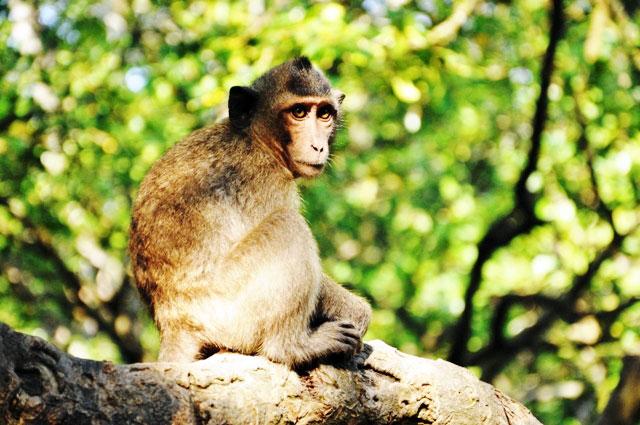 """Đặt chân đến """"vương quốc khỉ"""" trên ốc đảo xanh ở Sài Gòn - 4"""