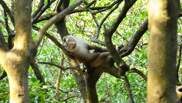 """Đặt chân đến """"vương quốc khỉ"""" trên ốc đảo xanh ở Sài Gòn - 19"""