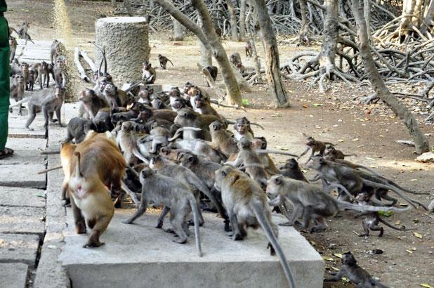 """Đặt chân đến """"vương quốc khỉ"""" trên ốc đảo xanh ở Sài Gòn - 20"""