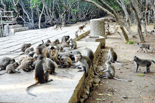"""Đặt chân đến """"vương quốc khỉ"""" trên ốc đảo xanh ở Sài Gòn - 5"""