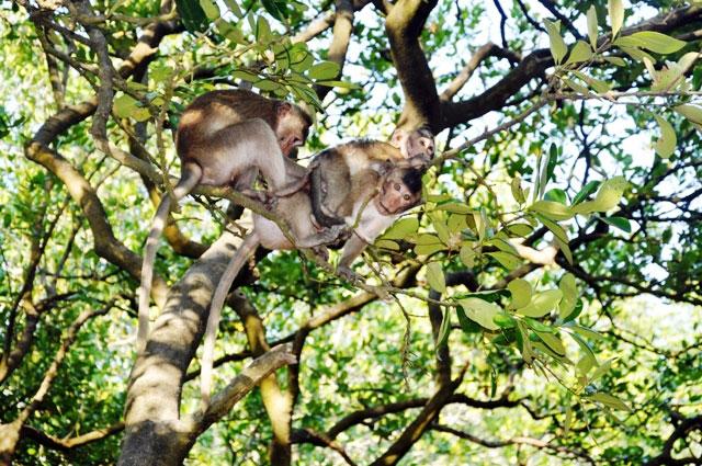 """Đặt chân đến """"vương quốc khỉ"""" trên ốc đảo xanh ở Sài Gòn - 2"""
