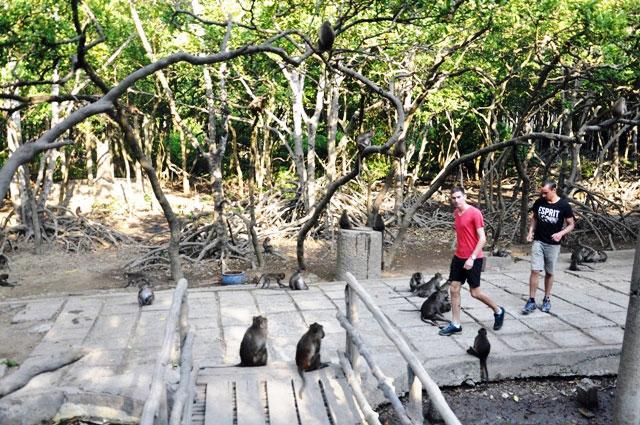 """Đặt chân đến """"vương quốc khỉ"""" trên ốc đảo xanh ở Sài Gòn - 6"""