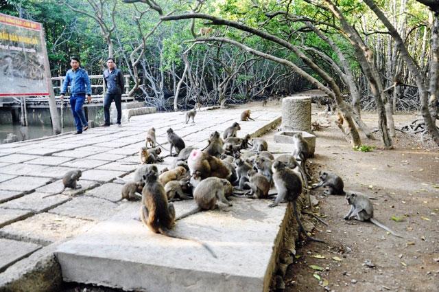 """Đặt chân đến """"vương quốc khỉ"""" trên ốc đảo xanh ở Sài Gòn - 7"""