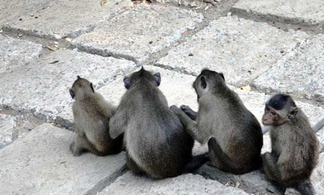 """Đặt chân đến """"vương quốc khỉ"""" trên ốc đảo xanh ở Sài Gòn - 9"""