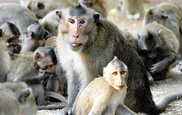 """Đặt chân đến """"vương quốc khỉ"""" trên ốc đảo xanh ở Sài Gòn - 21"""