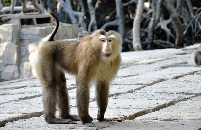 """Đặt chân đến """"vương quốc khỉ"""" trên ốc đảo xanh ở Sài Gòn - 22"""