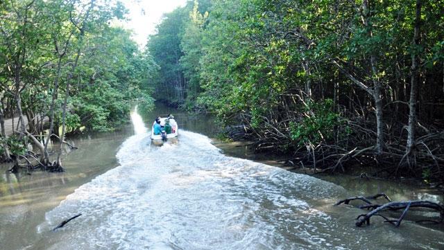 """Đặt chân đến """"vương quốc khỉ"""" trên ốc đảo xanh ở Sài Gòn - 23"""