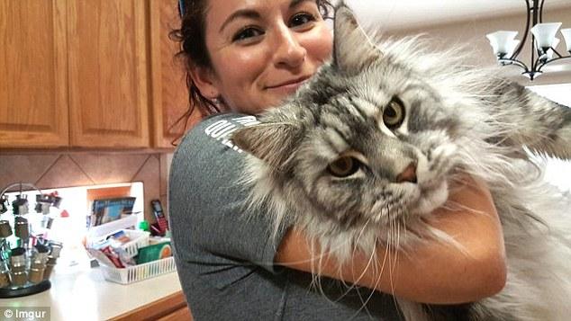 Những chú mèo 'khổng lồ' gây sốt mạng xã hội - 5