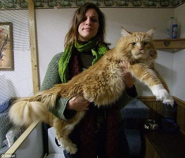 Những chú mèo 'khổng lồ' gây sốt mạng xã hội - 6