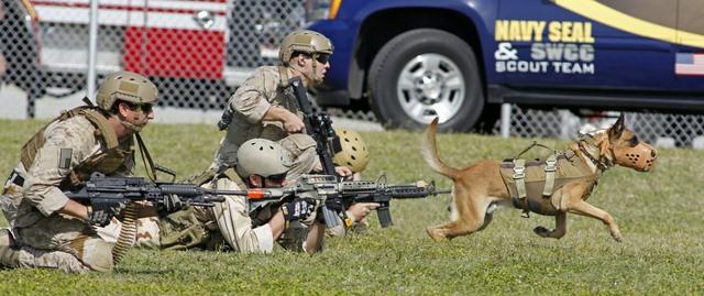 Chó nghiệp vụ của đặc nhiệm SEAL được luyện thế nào? - 10
