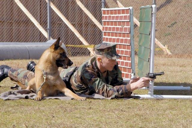 Chó nghiệp vụ của đặc nhiệm SEAL được luyện thế nào? - 4