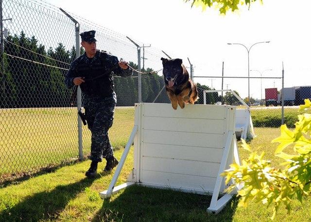 Chó nghiệp vụ của đặc nhiệm SEAL được luyện thế nào? - 6