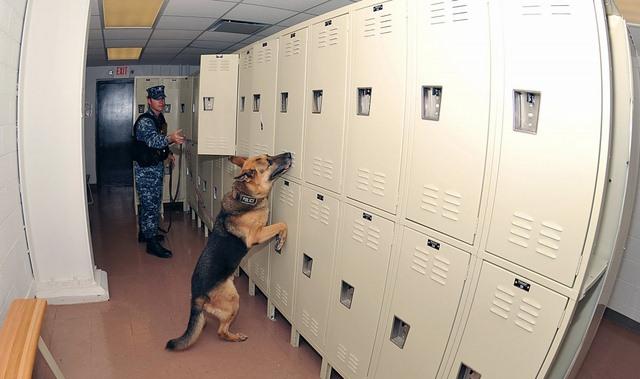 Chó nghiệp vụ của đặc nhiệm SEAL được luyện thế nào? - 9