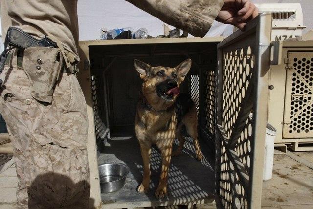 Chó nghiệp vụ của đặc nhiệm SEAL được luyện thế nào? - 12