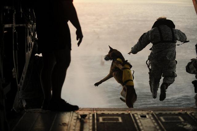 Chó nghiệp vụ của đặc nhiệm SEAL được luyện thế nào? - 13