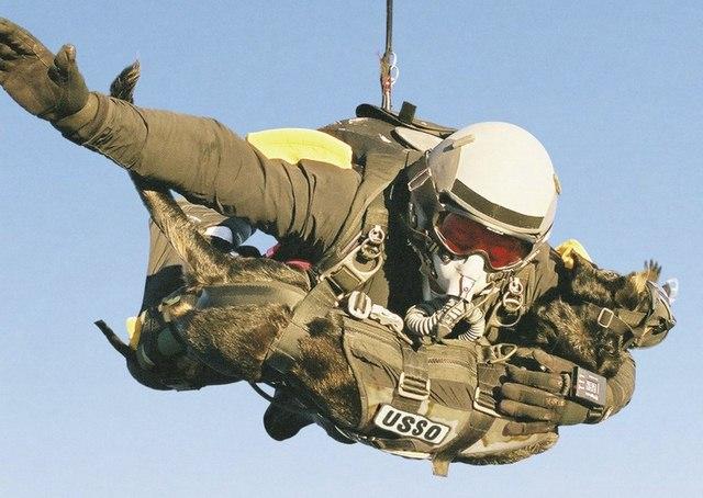 Chó nghiệp vụ của đặc nhiệm SEAL được luyện thế nào? - 14