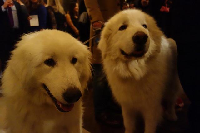 Đám cưới xa hoa của đôi chó nổi tiếng nhất Instagram - 3