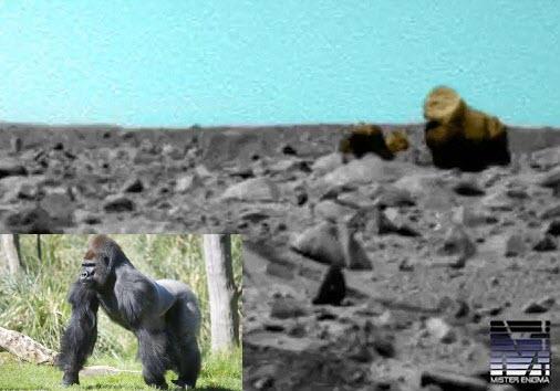 Phát hiện khỉ đột và lạc đà trên sao Hỏa - 1