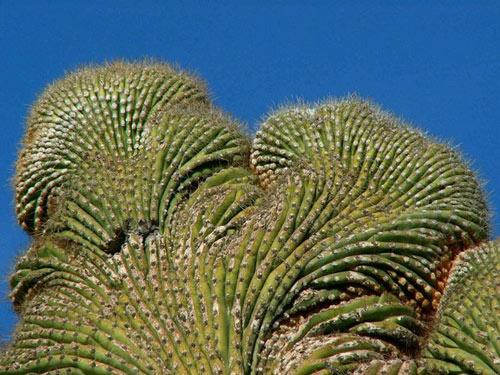 """Đã mắt ngắm những """"gã khổng lồ"""" giữa sa mạc Sonoran - 6"""