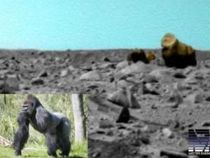 Phát hiện khỉ đột và lạc đà trên sao Hỏa