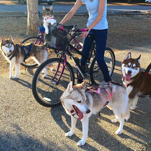 Cảm động tình bạn giữa mèo và 3 chú chó Husky - 6