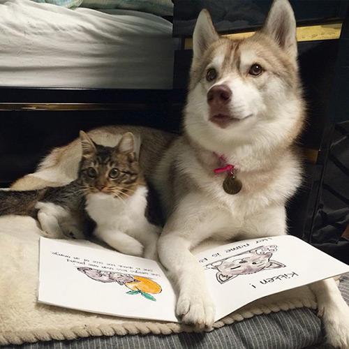 Cảm động tình bạn giữa mèo và 3 chú chó Husky - 5