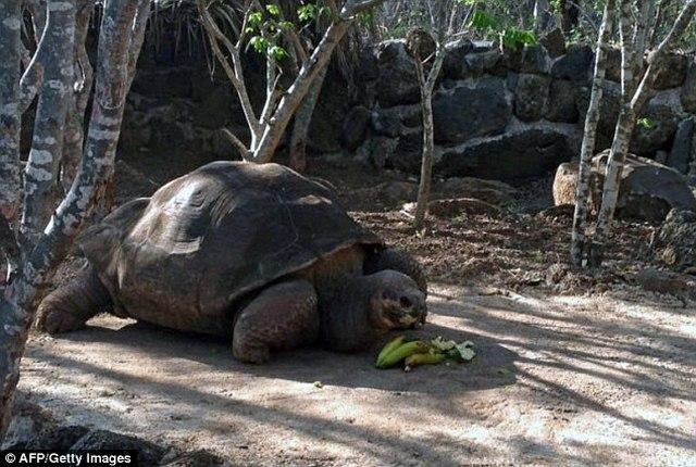 """4 """"cụ"""" rùa khổng lồ nổi tiếng nhất thế giới - 2"""