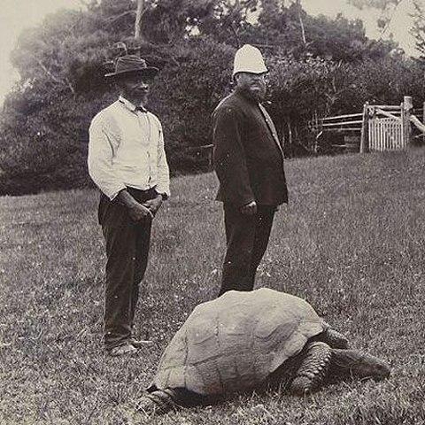 """4 """"cụ"""" rùa khổng lồ nổi tiếng nhất thế giới - 4"""