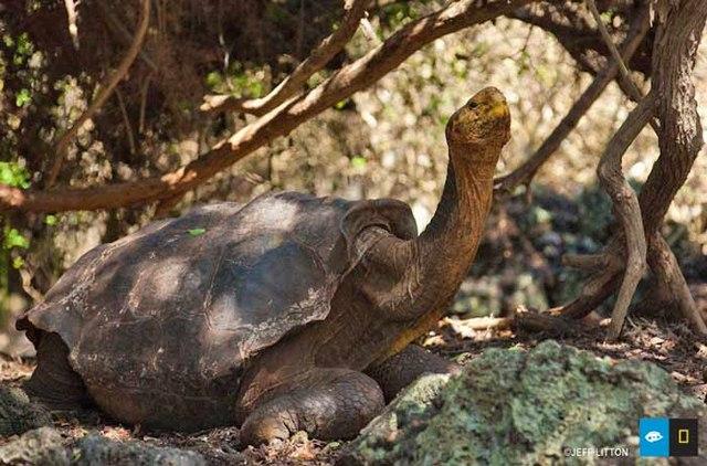 """4 """"cụ"""" rùa khổng lồ nổi tiếng nhất thế giới - 3"""