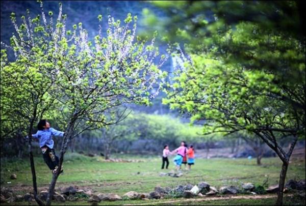 Mùa Xuân sớm trên những cung đường phượt Hà Giang - 12