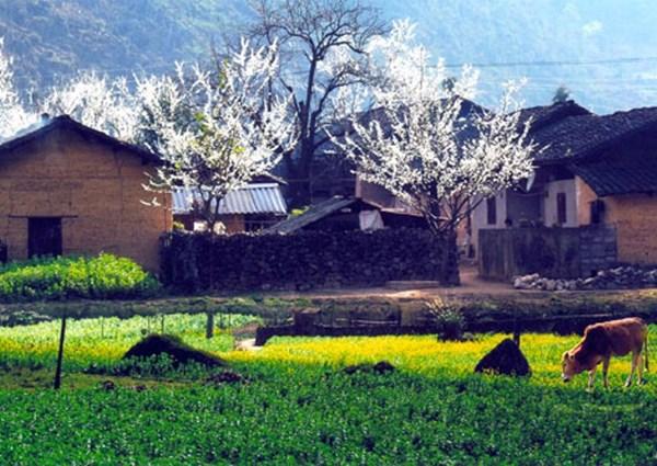 Mùa Xuân sớm trên những cung đường phượt Hà Giang - 6