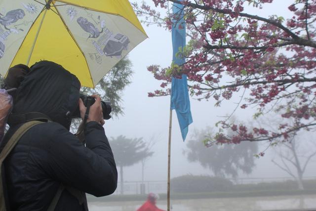 Ngắm hoa anh đào khoe sắc trong mưa lạnh buốt ở Sa Pa - 12
