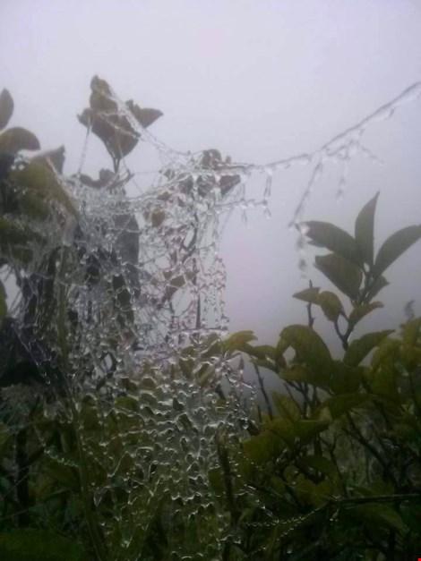 Xuất hiện băng giá ở miền Tây Nghệ An, dân lo lắng - 1