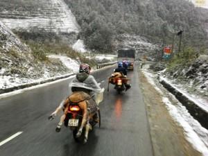 Tin tức Việt Nam - Người dân Sa Pa đau xót nhìn trâu chết rét