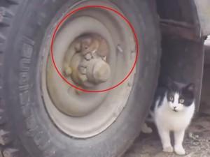Video clip: Hài hước cảnh Tom và Jerry đời thực