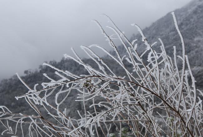 Không khí lạnh suy yếu, miền Bắc vẫn rét đậm, rét hại - 1