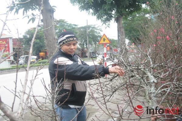 Đào rừng, đào cổ bạc triệu đổ về Hà Nội - 6