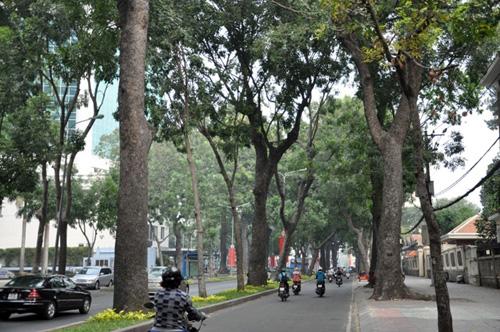 Sài Gòn tháng Chạp se lạnh và xuất hiện sương mù - 8