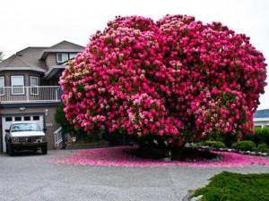 Những loài cây lộng lẫy khiến cả thế giới bị mê hoặc