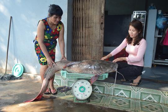 Bắt được cá lăng nặng hơn 40kg trên sông Sêrêpốk - 2