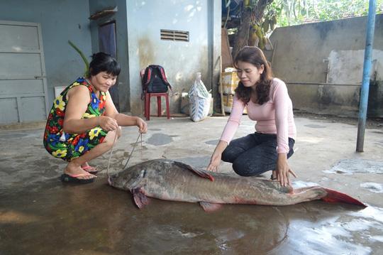 Bắt được cá lăng nặng hơn 40kg trên sông Sêrêpốk - 3