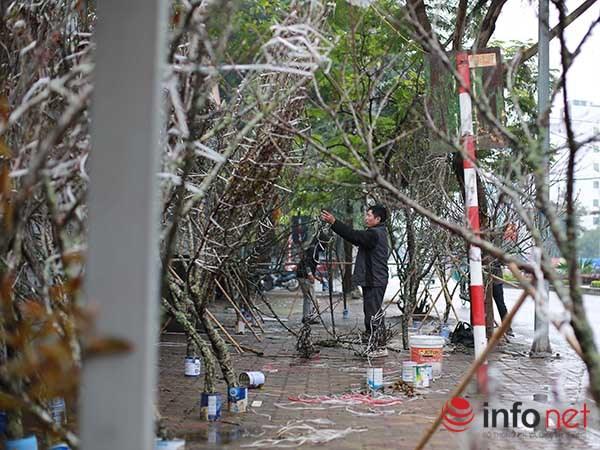 Đào rừng chớm nở trên phố Thủ đô khi trời vừa nắng ấm - 9