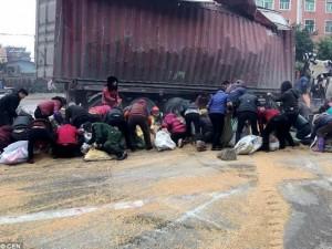 TQ: Hàng trăm người tranh nhau hôi lúa mì từ xe tải đổ