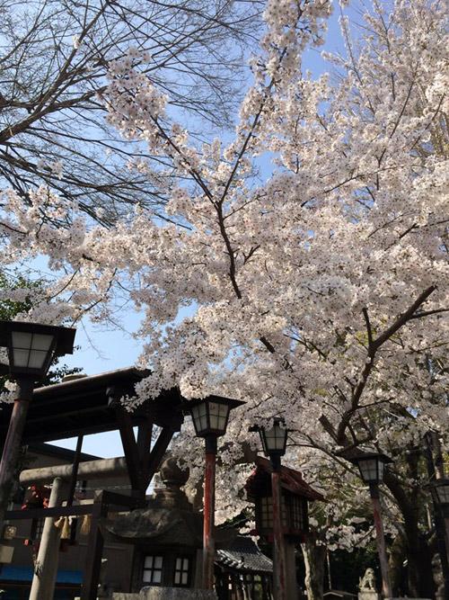 Sự thật thú vị ít ai biết về du lịch Nhật Bản - 3
