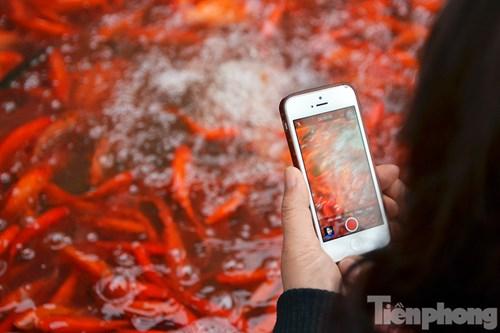 Tấp nập chợ cá ông Công, ông Táo lớn nhất Hà Nội - 12