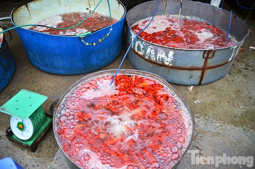 Tấp nập chợ cá ông Công, ông Táo lớn nhất Hà Nội - 13