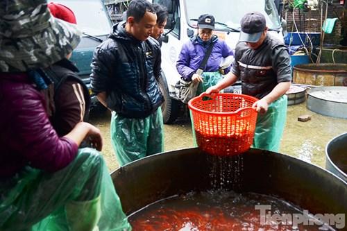 Tấp nập chợ cá ông Công, ông Táo lớn nhất Hà Nội - 2